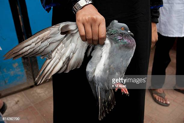 OLD DHAKA DHAKA BANGLADESH A girl with pigeon to join in a religious rally during the celebration of the day Ashura on 10th of Muharram the first...