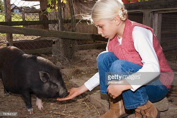 Girl (7-9) with pot-bellied pig in barn, side view