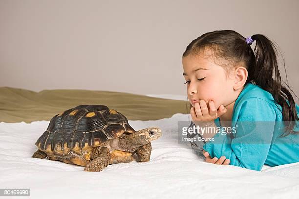 少女、トータスストラップト - 爬虫類 ストックフォトと画像