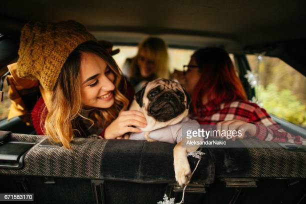 Girlfriends and their puppy on a road trip