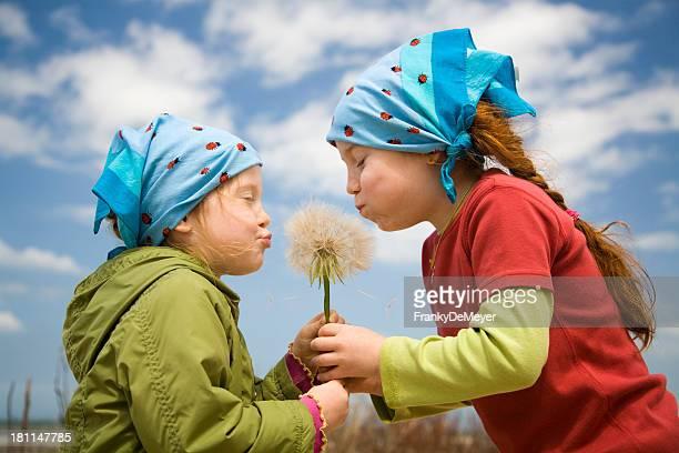 girls blowing a huge dandelion puff
