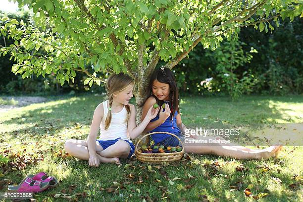 2 girls eating plums under a tree - seulement des enfants photos et images de collection