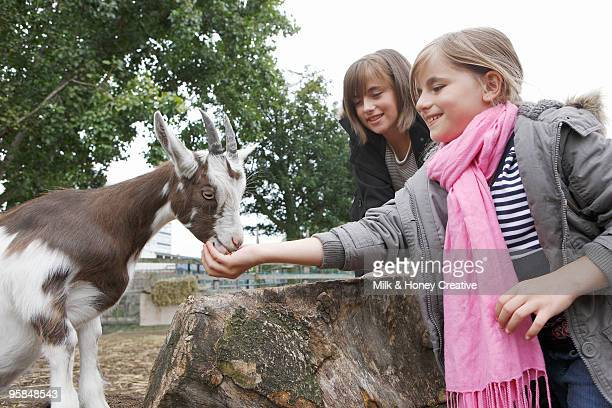 girls feeding baby goat