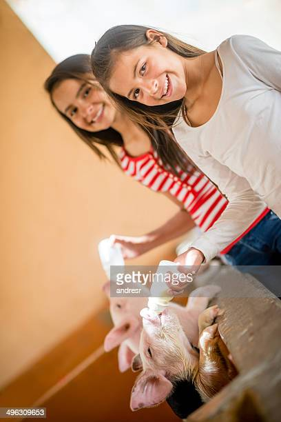 girls feeding the piglets - woman breastfeeding animals stock photos and pictures