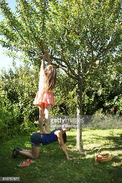 2 girls gathering plums in the tree