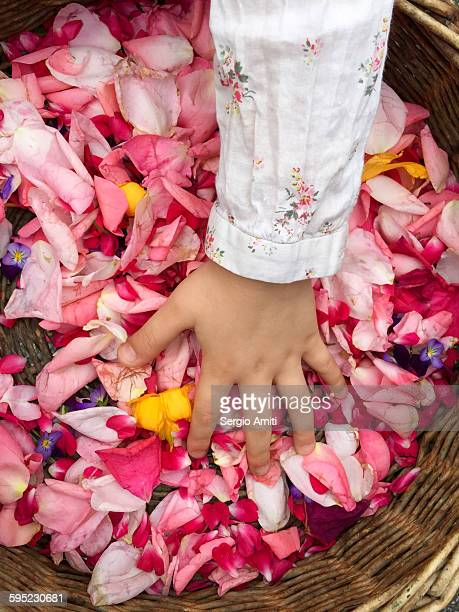 A girl's hand in a basket of pink flowers