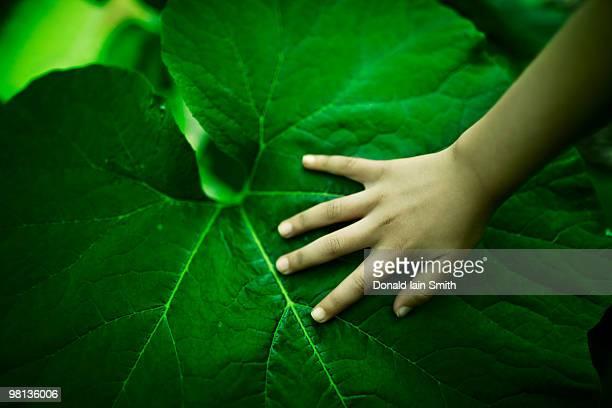 Girl's hand on leaf
