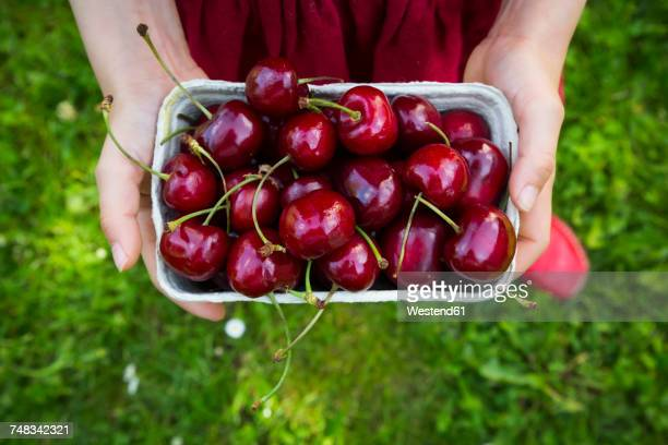 Girl's hands dress holding cardboard box of cherries, close-up