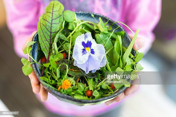 girl's hands holding bowl of wild-herb salad with edible flowers, cranberries and wolfberries - pansy stock pictures, royalty-free photos & images