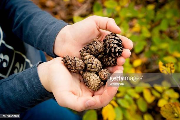 Girls hands holding pine cones