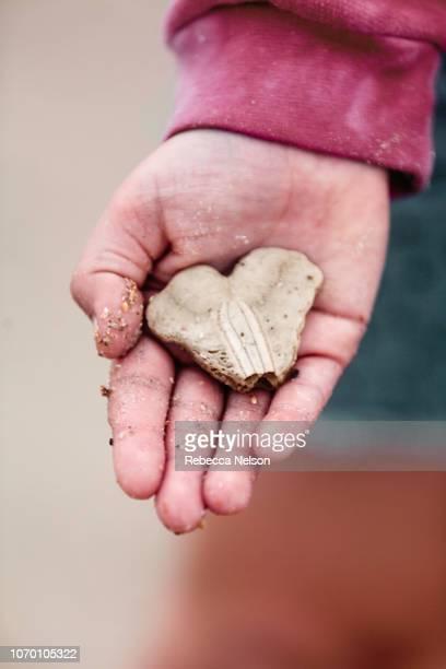 Girl's hands holding seashell on the beach