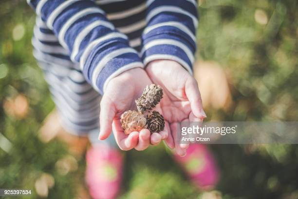 Girl's Hands Holding Tiny Pine Cones