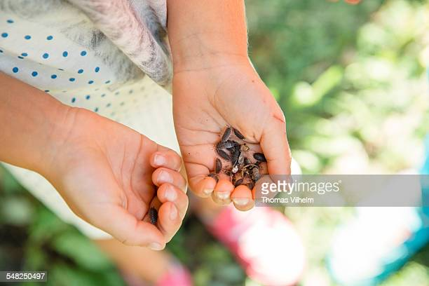 girls hands with woodlice - potato bug stock pictures, royalty-free photos & images