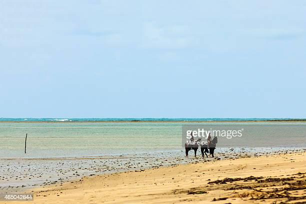 Girls horseback riding in the sands of Deserted Beach