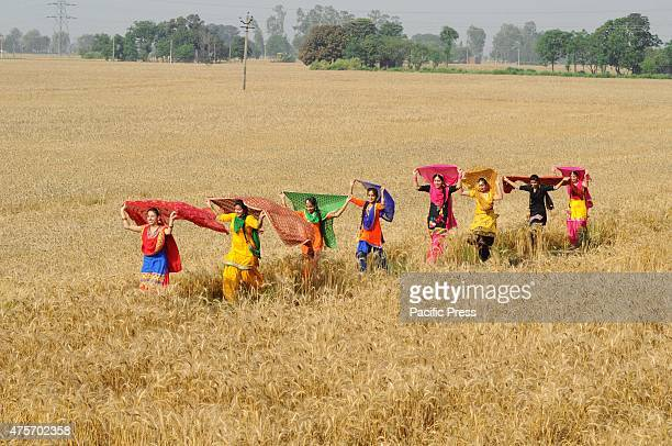 Girls in a traditional Punjabi dress during Baisakhi celebrations in a wheat field near Patiala Baisakhi which falls on 14 April People of North...