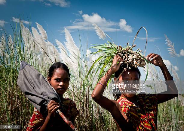 girls in field - bangladesh village stock photos and pictures