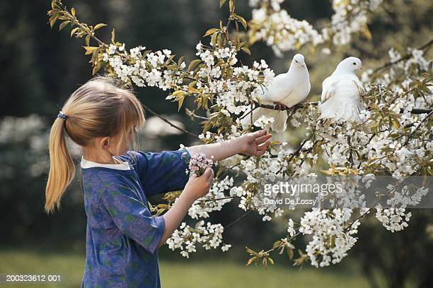 girls (4-7) in garden with dove perching on tree - colombe photos et images de collection