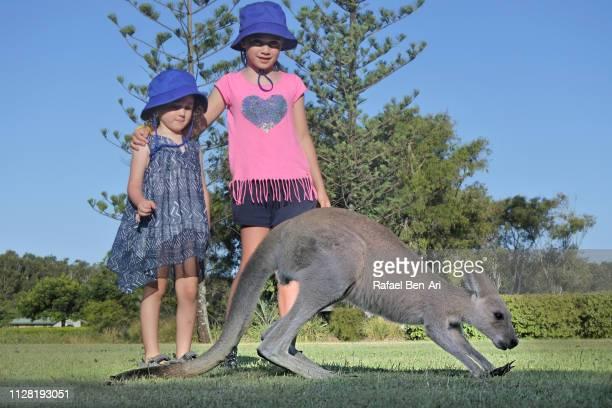 girls looking at kangaroo eating green grass - rafael ben ari imagens e fotografias de stock