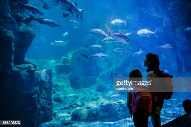 Girls looking at the fish in a big aquarium