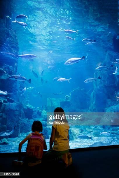 Filles recherchant le poisson dans un grand aquarium