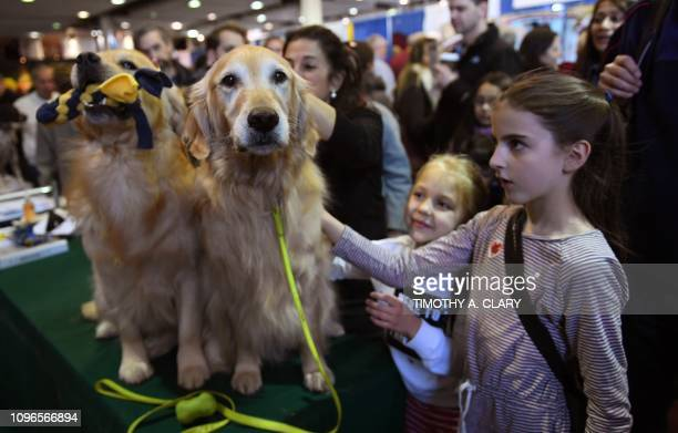 Girls pet Golden Retrievers during the 10th Annual Meet the Breeds event as the The American Kennel Club and Westminster Kennel Club present Meet...