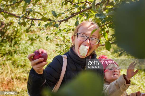 girls picking and eating apples from tree - heshphoto stock pictures, royalty-free photos & images