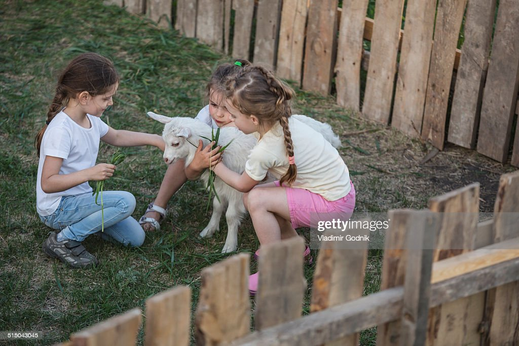 Girls playing with baby goat in park : Stock Photo