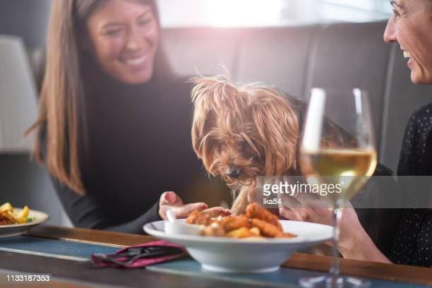 girls with a dog in a restaurant - dog eats out girl stock pictures, royalty-free photos & images