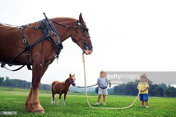 Girls with Clydesdale horse and Shetland pony