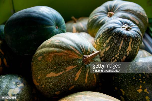 Giromon pumpkins are pictured at a farm in SaintFrancois on the French overseas territory of Guadeloupe on April 11 2018