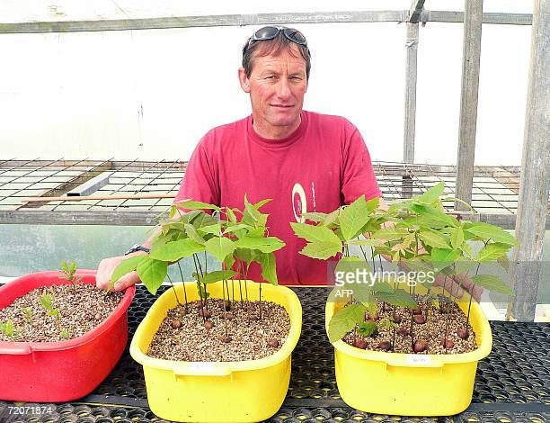 Truffle farmer Alan Hall with seedlings which he innoculates with truffle spores to be sold to other people wanting to farm in Gisborne 05 September...
