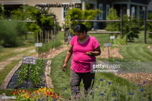 Gita Kanumuru volunteered in the YouPick Garden while visiting her cousin who lives in Willowsford The YouPick Garden offers residents the...