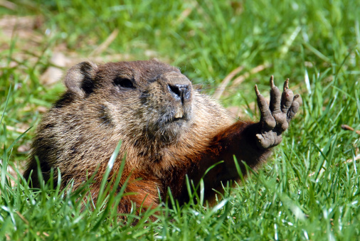 Give me five shows Groundhog 186380051