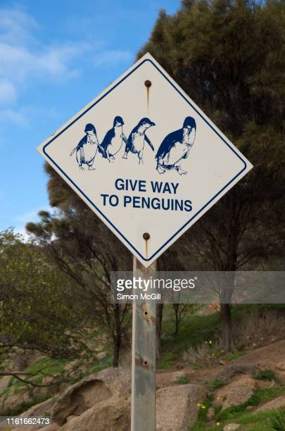 'give way to penguins' warning sign on granite island, victor harbor, south australia, australia - animal crossing stock pictures, royalty-free photos & images
