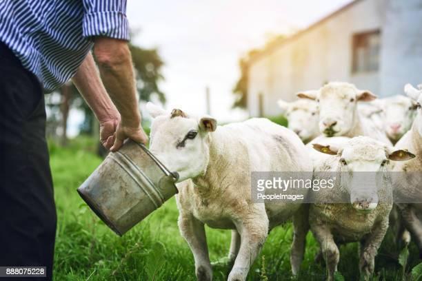 彼の羊に良いものを与えること