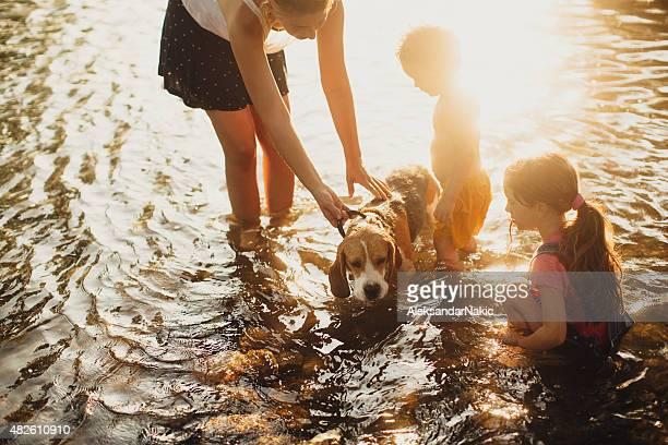 Dar el perro un baño en el río