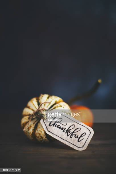 giving thanks with pumpkin assortment still life and thankful message - thanksgiving cat stock pictures, royalty-free photos & images