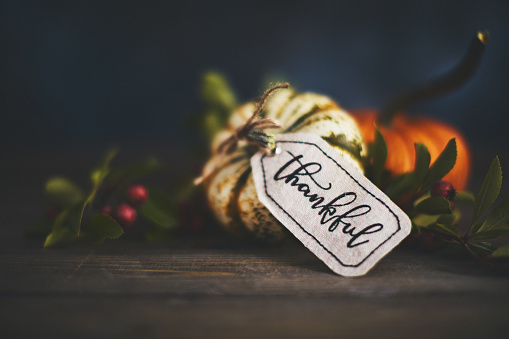 Giving thanks with pumpkin assortment still life and thankful message 1039371868