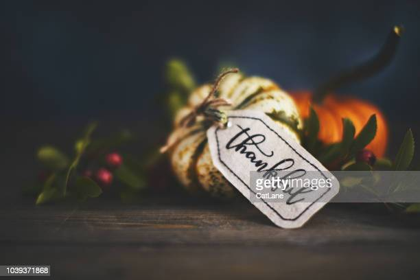 giving thanks with pumpkin assortment still life and thankful message - thanksgiving holiday stock pictures, royalty-free photos & images