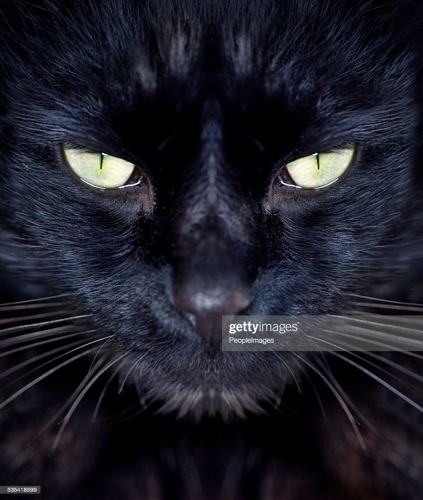 Giving you an intense stare : Stockfoto