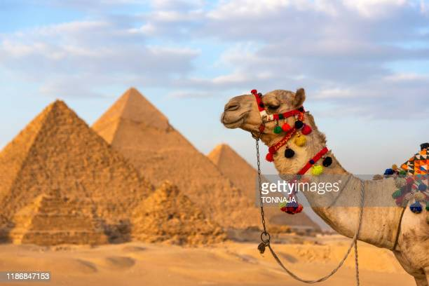 giza egypt pyramids - celebrity death stock pictures, royalty-free photos & images