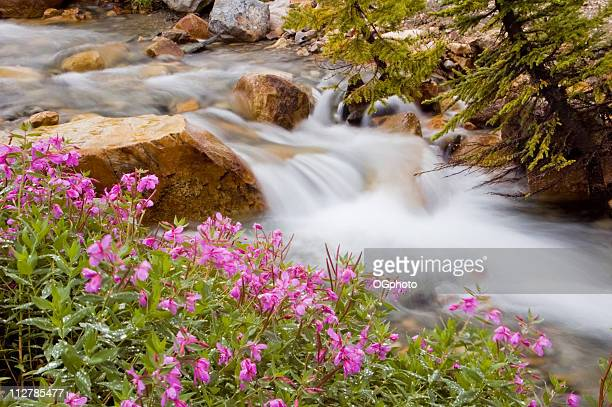glacial stream with wild flowers - ogphoto stock photos and pictures