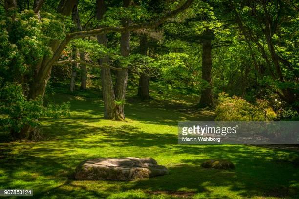 Glade in groen park