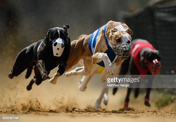 Gladiator Ramanus and Chasing Lane's Firing Aces fight for the lead during the 22th race of the SolitudeRace 2016 on April 10 2016 in Sachsenheim...