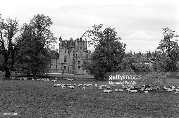 Glamis Castle in front of it there is a big lawn with a flock Angus