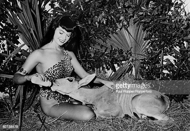 1954 American pinup glamour model Bettie Page born Nashville Tennessee pictured here feeding a young Eland calf while on a modelling assignment at...