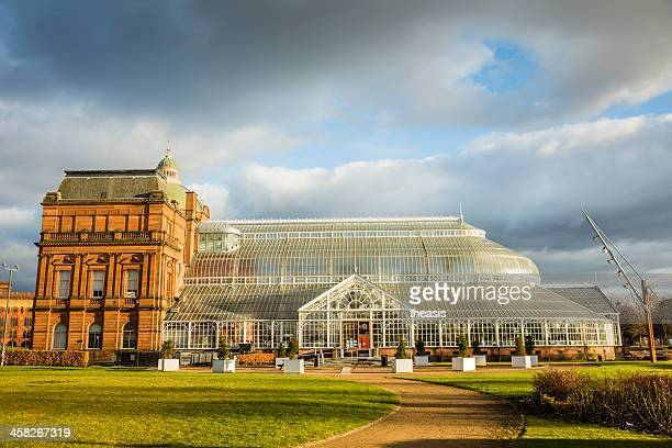 glasgow winter gardens and people's palace - botanical garden stock pictures, royalty-free photos & images
