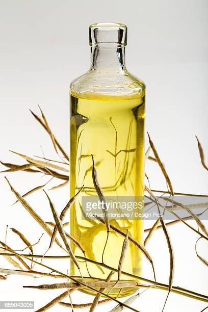 A glass bottle of canola oil with dried canola seed pods on a white background