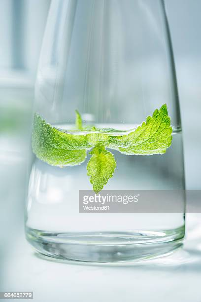 Glass bottle of water flavored with lemon balm