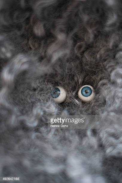glass eyes on stuffed toy - shock tactics stock pictures, royalty-free photos & images